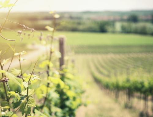 Mer magiska viner i maj